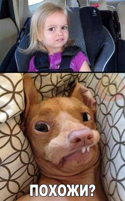 Самые милые фото приколы дети и животные (23 фото)