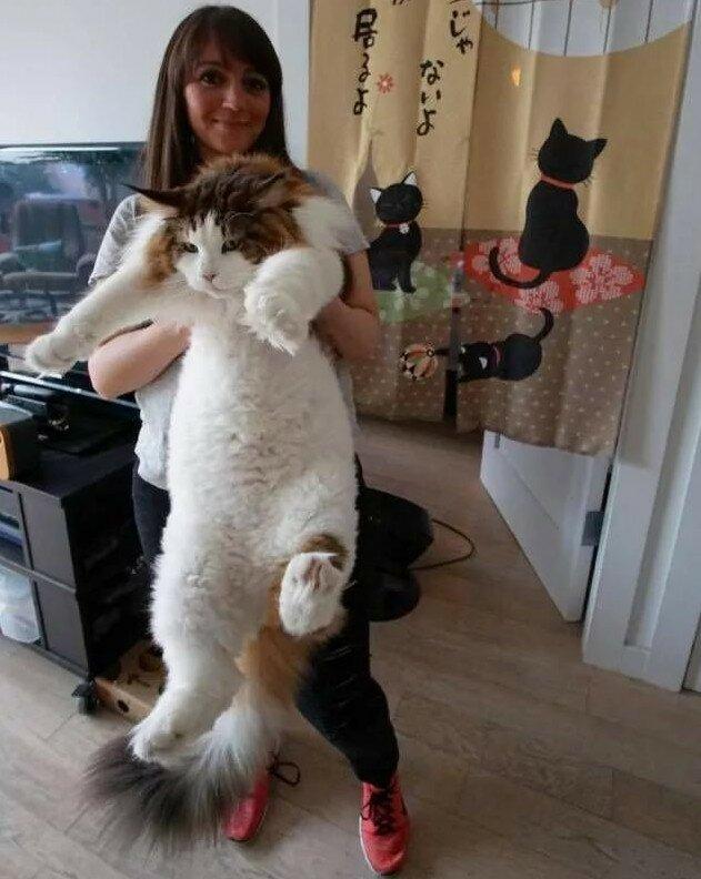Позитивные и милые фотографии с котиками