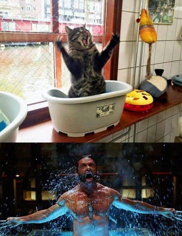 Самые прикольные снимки с животными