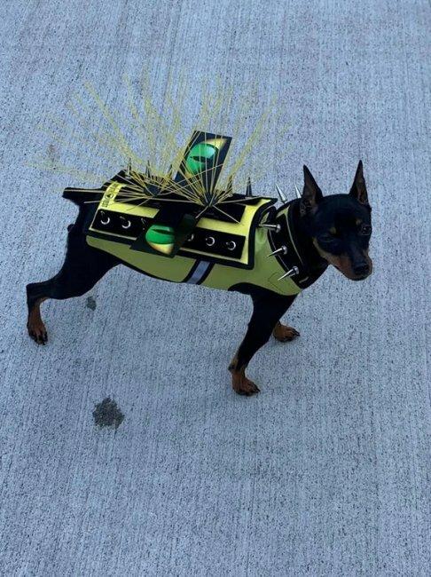 Защитный жилет для маленьких собак